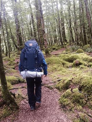 Harris in het bos.png